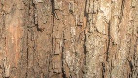 Hölzerne Beschaffenheit einer Baumrinde mit natürlichem Muster Lizenzfreie Stockfotos