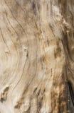Hölzerne Beschaffenheit eines Baums Stockfotos