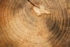 Hölzerne Beschaffenheit eines Baums Lizenzfreie Stockfotografie