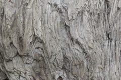 Hölzerne Beschaffenheit Graues Bauholzbrett mit verwitterten Sprungslinien Natürlicher Hintergrund für schäbiges schickes Design  Lizenzfreies Stockfoto