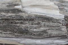 Hölzerne Beschaffenheit Graues Bauholzbrett mit verwitterten Sprungslinien Natürlicher Hintergrund für schäbiges schickes Design  Stockbild