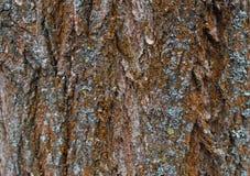 Hölzerne Beschaffenheit Hölzerner Hintergrund Sonderkommando im Baum Lichtstrahlen schließen oben Lizenzfreies Stockfoto