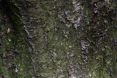Hölzerne Beschaffenheit Hölzerner Hintergrund Sonderkommando im Baum Lichtstrahlen schließen oben Stockbild