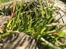 Hölzerne Beschaffenheit mit Grünpflanze Lizenzfreie Stockfotos