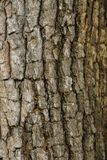 Hölzerne Beschaffenheit mit natürlichen Mustern, alte Platten des Hintergrundes, Lizenzfreie Stockfotografie