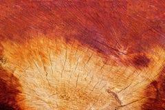 Hölzerne Beschaffenheit und Sprünge des Schnittbereichs im Holz für Hintergrund stockfotografie