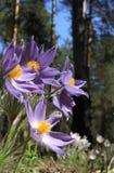 Hölzerne Blumen. Stockfoto