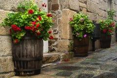 Hölzerne Blumentöpfe und -pelargonien Stockfotos