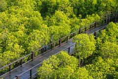 Hölzerne Brücke in der Mangrove Stockbilder