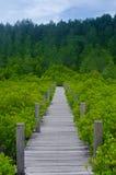 Hölzerne Brücke entlang Mangrovenwald Stockbild