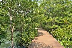 Hölzerne Brücke im Mangrovenwald Stockfotos