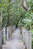 Hölzerne Brücke im Mangrovenwald stockfotografie