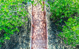 Hölzerne Brücke im Mangrovenwald von der Draufsicht Stockfotos