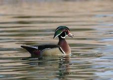 Hölzerne Ente auf dem Teich Lizenzfreie Stockbilder