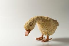 Hölzerne Ente im weißen Hintergrund Lizenzfreie Stockfotografie