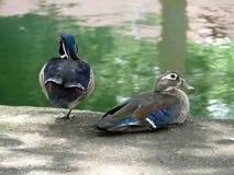 Hölzerne Ente-Paare Stockfoto