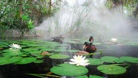 Hölzerne Ente und Gehilfe im nebelhaften Lilly Teich Lizenzfreie Stockfotos