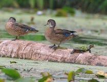 Hölzerne Enten auf einem Protokoll Stockfotos