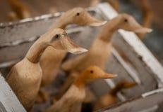 Hölzerne Enten für Verkauf Stockbild