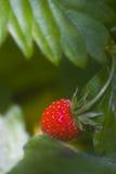 Hölzerne Erdbeeren Lizenzfreie Stockfotos