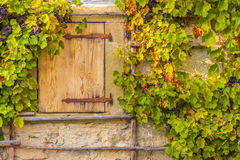 Hölzerne Falltür und Weinreben Stockbild