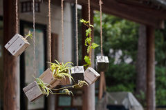 Hölzerne Flowerpots Lizenzfreies Stockfoto