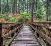 Hölzerne Fuß-Brücke entlang Spur im Wald Lizenzfreie Stockbilder