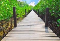 Hölzerne Gehwege im Mangrovenwald Stockfotos