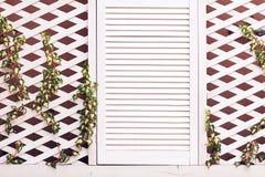 Hölzerne Gitterfassadenwand mit junger spinnender Efeuanlage Stockfoto