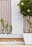 Hölzerne Gitterfassadenwand mit junger spinnender Efeuanlage und eingemachtem Topiary Ligustrum Lizenzfreies Stockbild