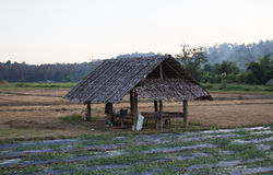 hölzerne Hütte im Bauernhof Stockfotografie