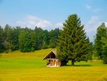 Hölzerne Hütte und Baum mitten in Wiese lizenzfreie stockbilder