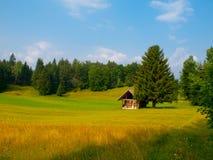 Hölzerne Hütte und Baum mitten in Wiese lizenzfreies stockbild
