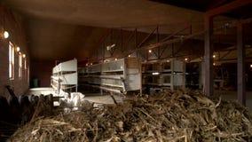 Hölzerne Käfige für das Züchten von Kaninchen am Bauernhof stock footage