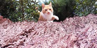 Hölzerne Katze stockbild