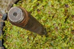 Hölzerne Kelterei für das Drücken von Trauben stockfoto