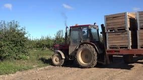 H?lzerne Kisten des Traktortransportes mit Apfelfr?chten ernten im Bauernhof Panorama 4K stock footage