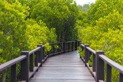 Hölzerne kleine Brücke auf der Waldmangrove Lizenzfreie Stockfotografie