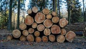 Hölzerne Klotz mit Wald auf Hintergrund Stämme von den Bäumen geschnitten und im Vordergrund gestapelt lizenzfreies stockfoto