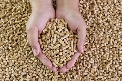 Hölzerne Kugeln in den weiblichen Händen Biologische Brennstoffe Alternativer biologischer Brennstoff Stockfotos