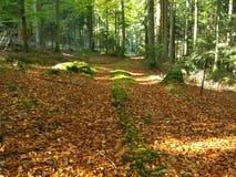 Hölzerne Landschaft im Herbst stockfotos