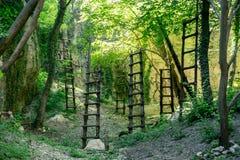 Hölzerne Leitern im tropischen Wald Stockfotografie