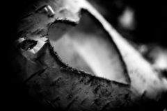 Hölzerne Liebe schnitzte in einer Birke lizenzfreie stockfotos