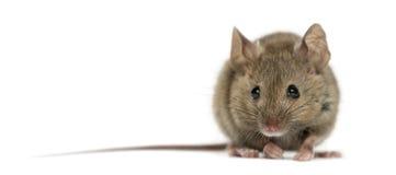Hölzerne Maus Stockfotografie