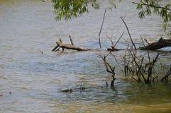 Hölzerne Niederlassungen teilweise versenkt in Wasser lizenzfreie stockfotos