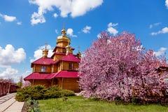 Hölzerne orthodoxe Kirche und ein purpurroter blühender Magnolienbaum am sonnigen Tag Stockfotos