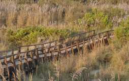 Hölzerne panoramische Brücke über den Sanddünen von Toskana Stockfotografie