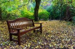 Hölzerne Parkbank im Herbst stockbild