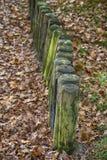 Hölzerne Pfosten im Herbstwald Lizenzfreies Stockbild