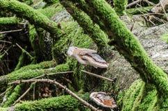 Hölzerne Pilze Stockfotografie